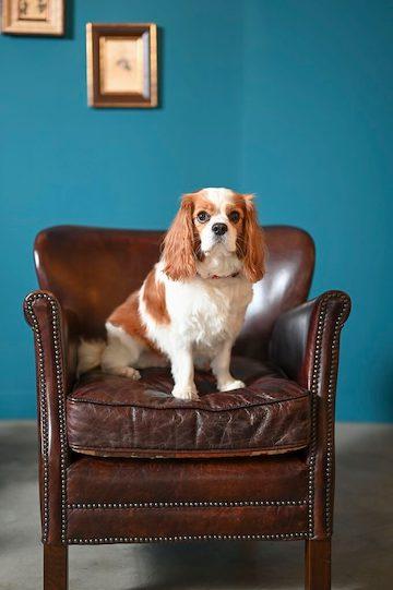 スタジオのオシャレなソファーの上に座っているわんちゃん