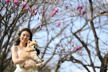 桜の木の下でペットのポメラニアンを抱っこしているウェディングドレスを着た花嫁