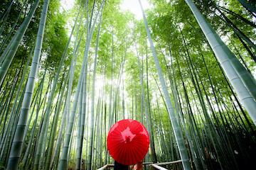 竹林のきれいなロケ地と和傘に移る和服のシルエット