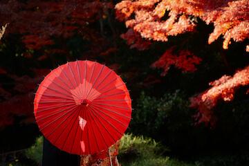 見事に色付いた紅葉と和傘に隠れた新郎新婦